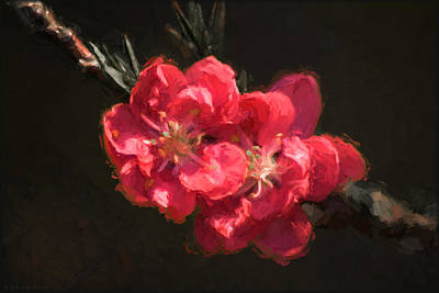 Photograph - Peach Blossoms In Oil by Erika Fawcett