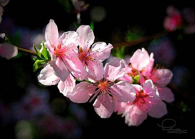 Cafe Art Photograph - Peach Blossoms by Ludwig Keck