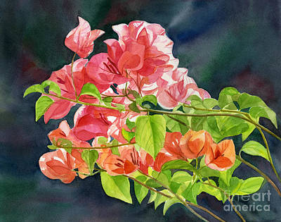 Peach Colors Painting - Peach Colored Bougainvillea With Dark Background by Sharon Freeman