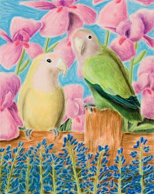 Lovebird Drawing - Peach-faced Lovebird by Jeanette K