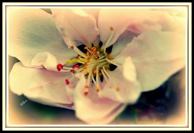 Peach Flower Art Print by Karen Kersey