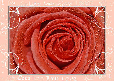 Photograph - Peach Love Rose by Debbie Portwood
