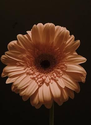 Photograph - Peach Mum by Regina Arnold