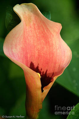 Photograph - Peach Of A Petal by Susan Herber