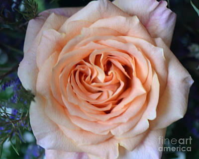 Photograph - Peach Of A Rose With Heart by Connie Fox