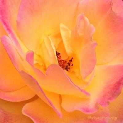 Florals Photograph - Peach Parfait  by Anna Porter