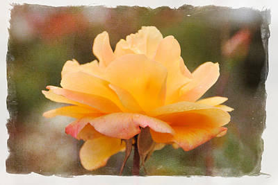Photograph - Peach Passion by Diane Wood