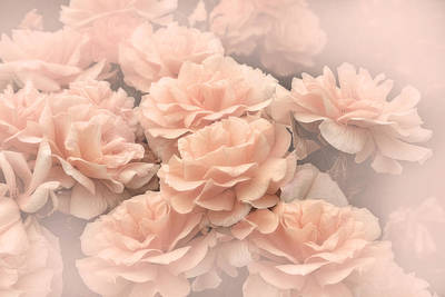 Photograph - Peach Pastels Rose Garden by Jennie Marie Schell