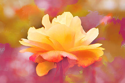 Photograph - Peach Perfection by Diane Wood