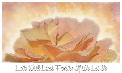 Photograph - Peach Rose - Forever Love by Debbie Portwood