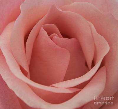 Peach Rose Art Print by Arlene Carmel