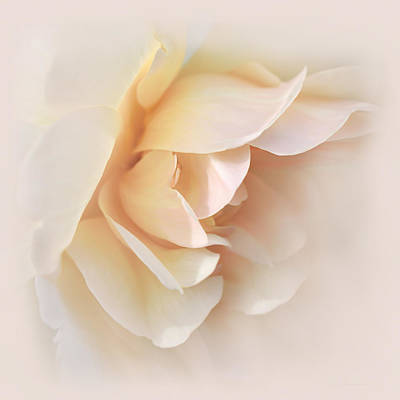 Photograph - Peach Rose Tranquillity by Jennie Marie Schell