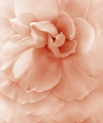 Photograph - Peach Ruffled Begonia Flower by Jennie Marie Schell