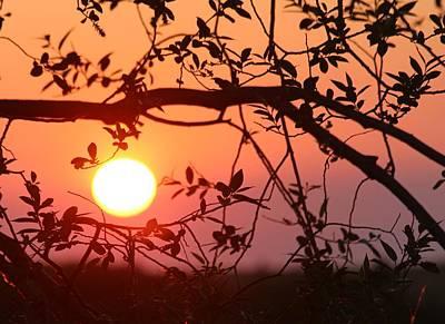Photograph - Peach Sunset by Tara Lowry