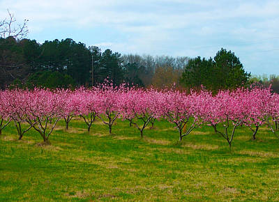 Peach Tree Grove By Jan Marvin Art Print