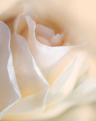 Photograph - Peaches And Cream Rose Flower by Jennie Marie Schell