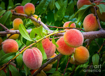 Peaches Art Print by Inge Johnsson