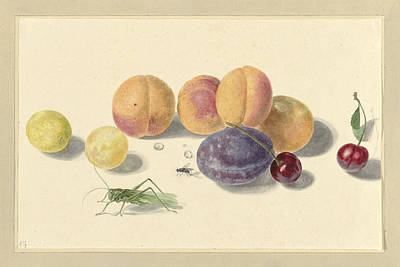 Peaches, Plums, Cherries And Two Insects Art Print