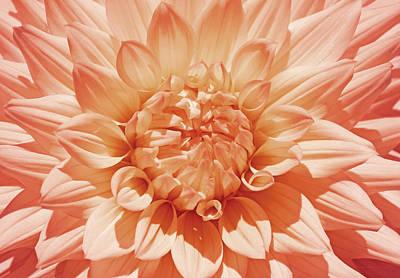 Photograph - Peachy Orange Dahlia Flower by Jennie Marie Schell