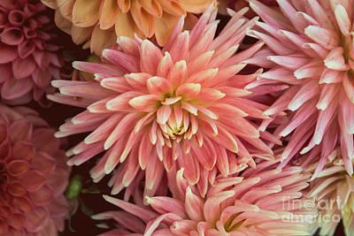 Purely Purple - Peachy Pink Dahlia by Arlene Carmel
