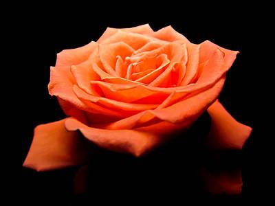 Photograph - Peachy Rose II by Eva Kondzialkiewicz