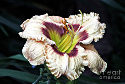 Photograph - Peachy With Ruffles Lily by Elizabeth Winter