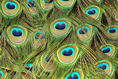 Photograph - Peacock Abstract Closeup by Adam Jewell