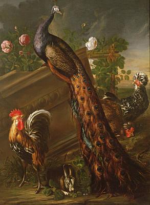 Rabbit Photograph - Peacock And Cockerels, 17th Century by David de Koninck