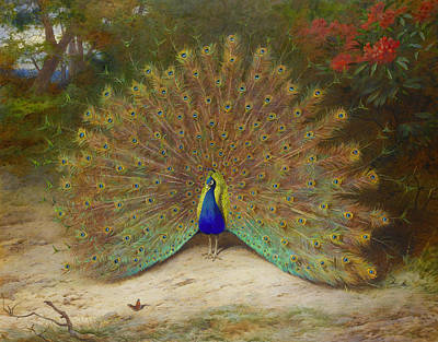 Abstract Wildlife Painting - Peacock And Peacock Butterfly by Archibald Thorburn