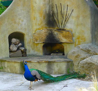 Photograph - Peacock At Home by Denise Mazzocco