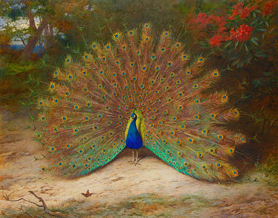 Peacock Butterfly Painting - Peacock Butterfly by Archibald Thorburn
