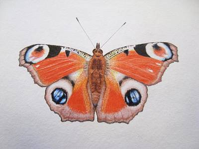 Peacock Drawing - Peacock Butterfly by Ele Grafton