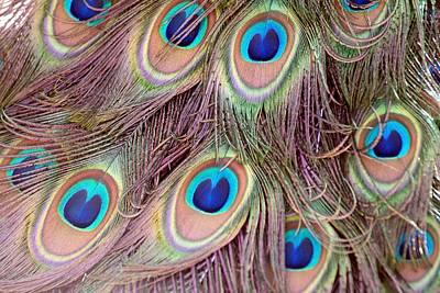 Photograph - Peacock Color by Michael Davis