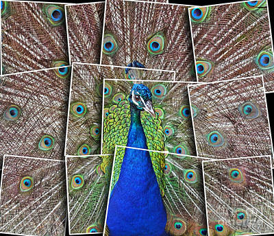 Photograph - Peacock Displaying His Plumage Altered Version by Jim Fitzpatrick