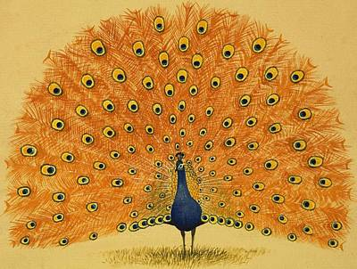 Peacock Drawing - Peacock by English School