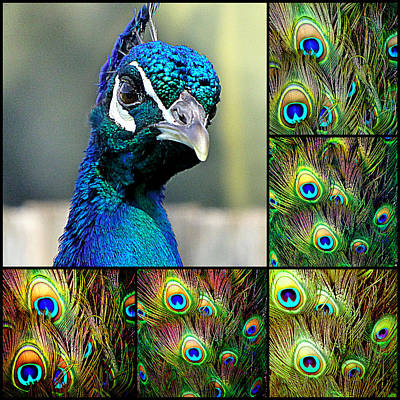 Hanging Mobile Photograph - Peacock Eye by Girish J