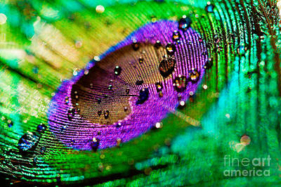 Photograph - Peacock Eye by Lisa Cockrell