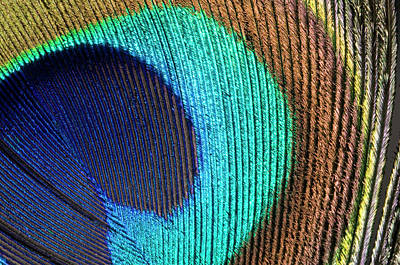 Vivid Colour Photograph - Peacock Feather Abstract by Nigel Downer