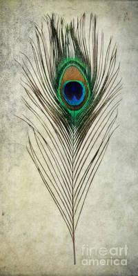 Peacock Photograph - Peacock Feather by Olga Hamilton