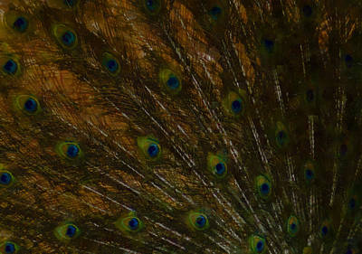 Digital Art - Peacock Feathers 1 by Ernie Echols