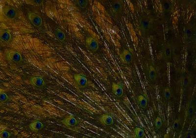 Digital Art - Peacock Feathers 1 by Ernie Echols