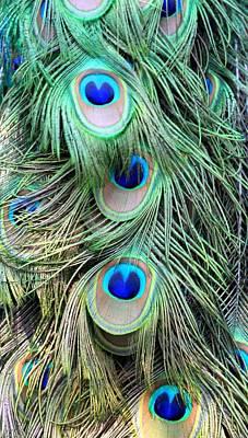 Peacock Feathers Art Print by AR Annahita