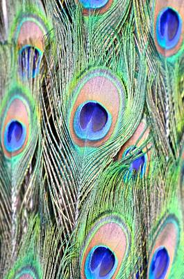 Photograph - Peacock Feathers by Catherine Murton