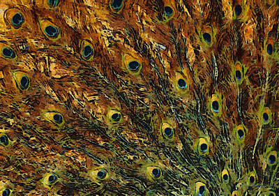Peacock Digital Art - Peacock Feathers by Ernie Echols