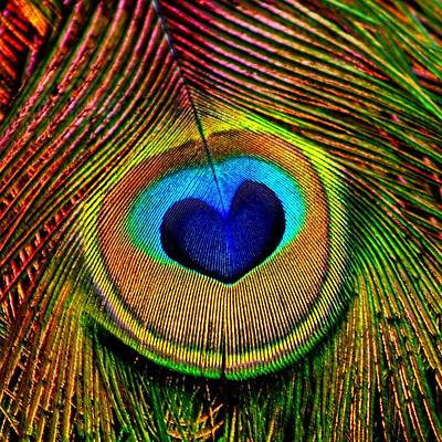 Peacock Feathers Eye Of Love Art Print