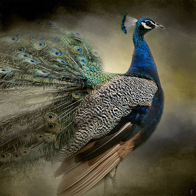 Photograph - Peacock From The Past - Wildlife by Jai Johnson