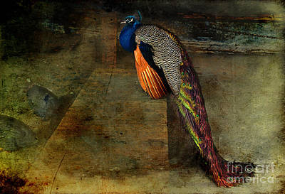 Western Art - Peacock in the Barn by David Arment