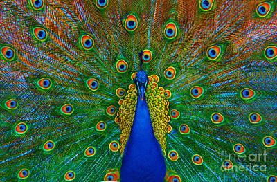 Photograph - Peacock by Lilianna Sokolowska