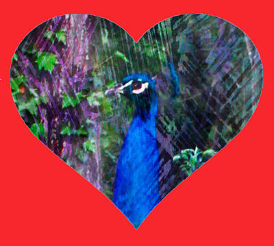 Photograph - Peacock Love by Dorothy Berry-Lound