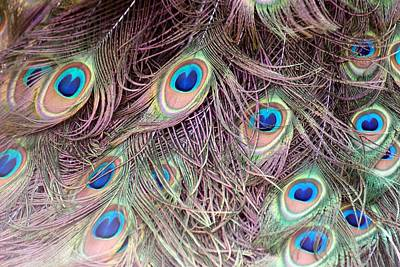 Photograph - Peacock by Michael Davis